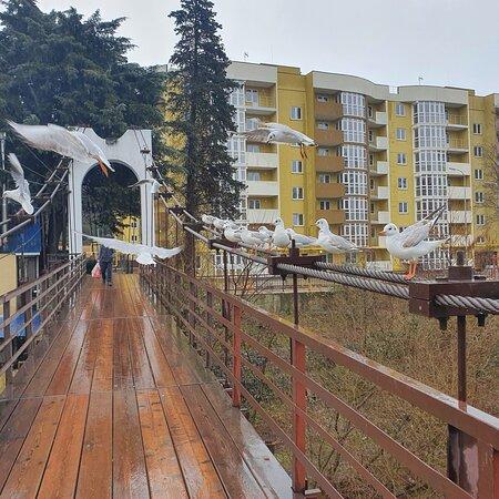 Dagomys, Nga: Сочи Дагомыс мост с него можно полюбоваться горой Успенка и покормить чаек