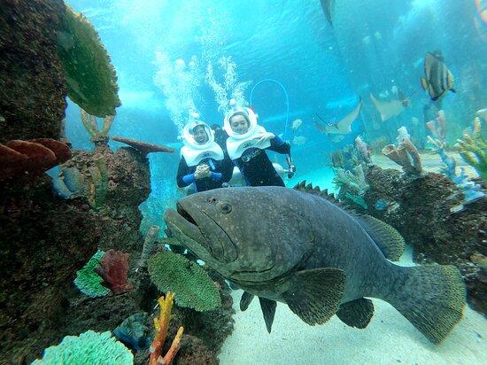 Cebu Ocean Park