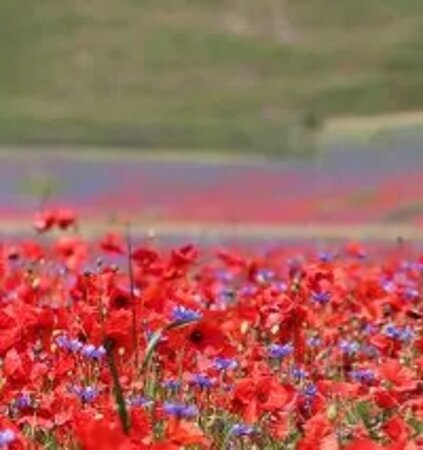Castelluccio di Norcia, إيطاليا: Castelluccio di Norcia 87