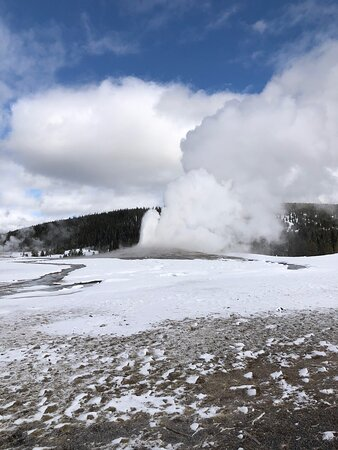 Chris from Scenic Safaris did a fantastic job driving our Snow Coach on February 18, 2021. We had two coaches for our group of 17. We saw lots of bisons. Yellowstone is gorgeous covered in snow and seeing the geothermal features in the cold simply amazing!