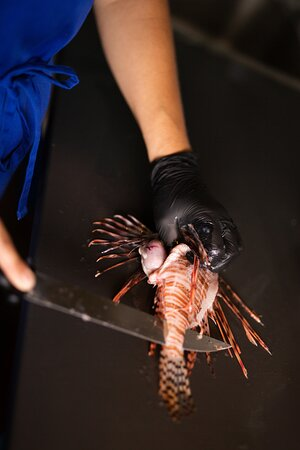 Lionfish in the making!
