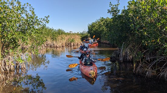 Manatees and Mangrove Tunnels Small Group Kayak Tour: and we're off!