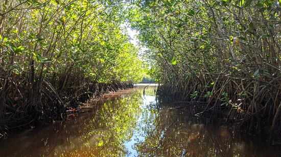 Manatees and Mangrove Tunnels Small Group Kayak Tour: gorgeous views from beneath the mangroves