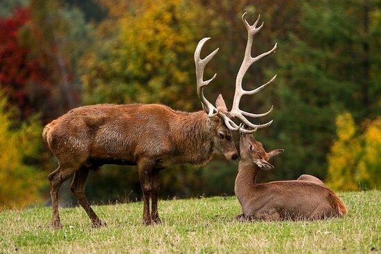 Wildpark Aurach