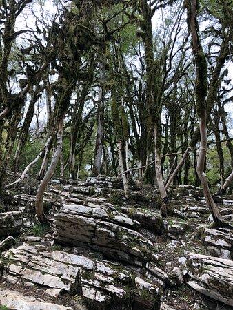 Самшитовый лес на камнях