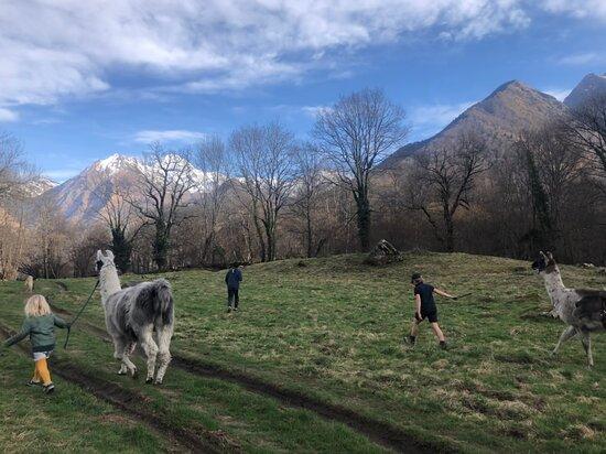 Les Lamas Des 7 Vallees
