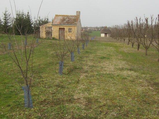 Les Jardins de Beauregard. Vue 28. Une Loge de Vigne Atypique ! Rare ! Vignes et Vergers Plantés aux Jardins de Beauregard, Depuis 1996. Propriété du Magny. Le Magny 36400.