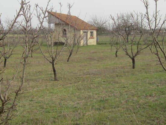 Les Jardins de Beauregard. Vue 27. Une Loge de Vigne Atypique ! Rare ! Vignes et Vergers Plantés aux Jardins de Beauregard, Depuis 1996. Propriété du Magny. Le Magny 36400.