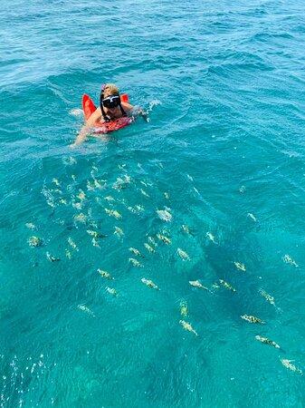 Starfish adventure