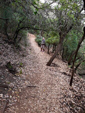 Meron, Israel: עצי אלון לרוב.