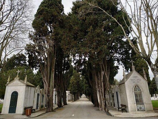 Cemiterio do Lumiar