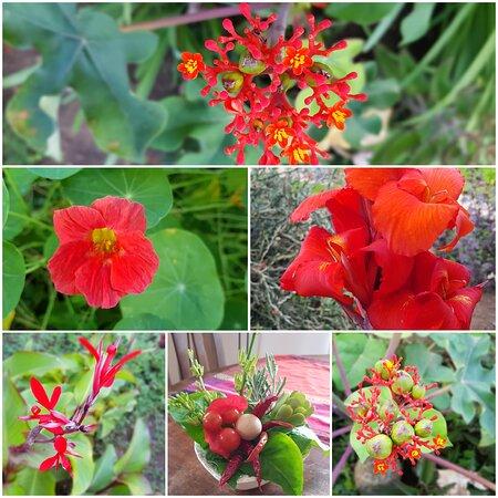 Garden red flowers