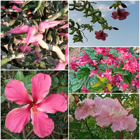 Garden other pink flowers !