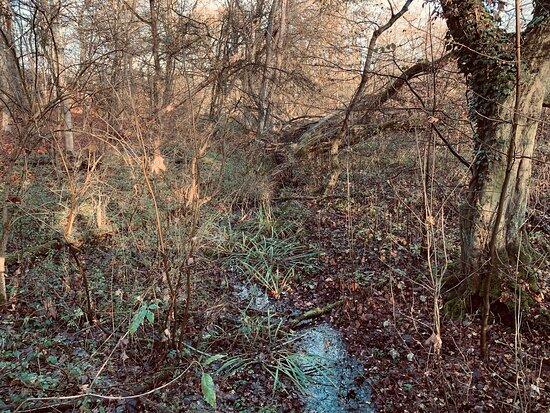 Naturschutzgebiet Beversee