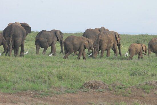 Amboseli National Park..