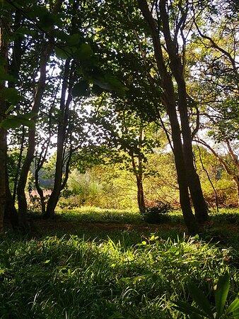 Montrose, UK: Rosemount Estate, Hillside