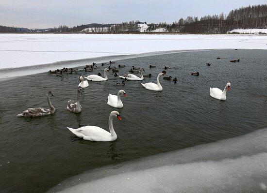 Gorodishhenskoye Lake