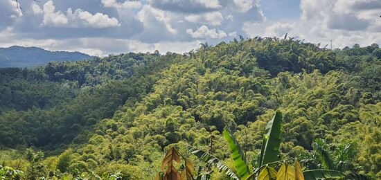 Gorgeous Jungle Views