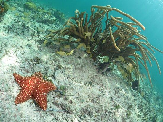 Sea Star at Rajao Reef.