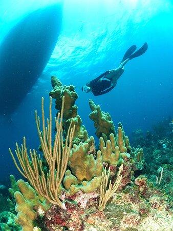 Snorkeling sites just 3 to 5 metes deep.