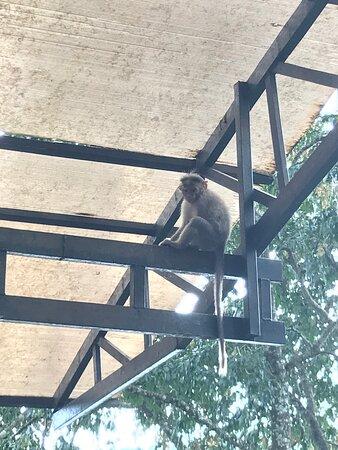 Monkey in waiting area