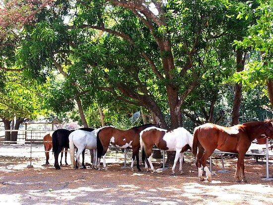 Portegolpe, Costa Rica: Ride the best at Casagua Horses