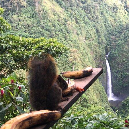 Costa Rica, Мексика: Servicios turísticos gusto serviles