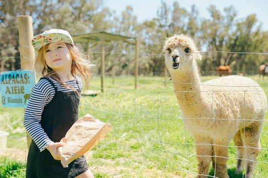 Feeding the farm animals at The Orchard Perth