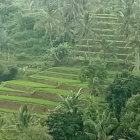 Beauty of sapit east Lombok