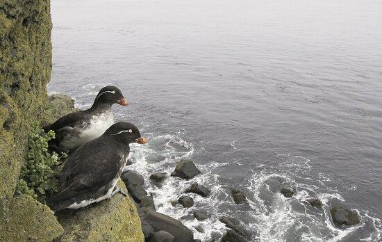 Saint Paul Island, AK: Saint Pausl Island 8