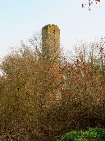 La boscaglia sembra erigere un muro impenetrabile; in realtà poi è facile individuare un sentiero che permette di raggiungere la torre senza troppe difficoltà