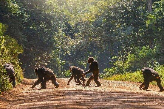 8-Day Private Uganda Safari Tour