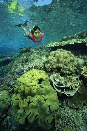 Explore all of FTLs Marine Life!