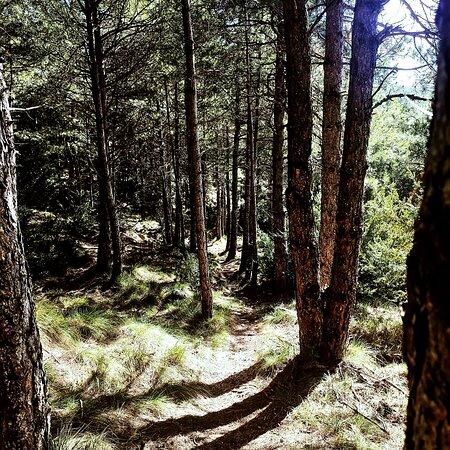 Sierra de Santo Domingo -Biel . Un lugar muy bonito con rutas fáciles, muy cerca de Zaragoza, Aragón.