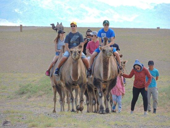 Dalanzadgad, Mongolia: Camel riding in Gobi.