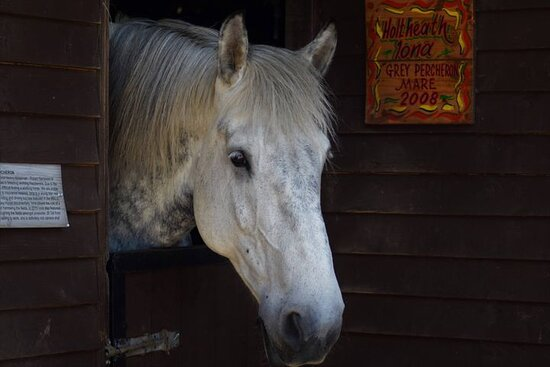 Iona Percheron has featured on BBC TV and Cbeebies Down on the farm!
