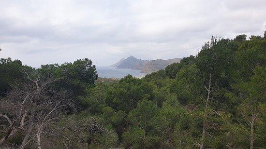 Atamaria-bild