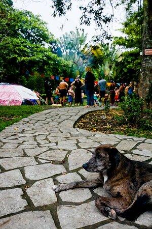 Santa Isabel, Ecuador: Preparing for a healing sweatlodge at home