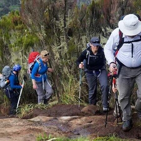 Mount Kilimanjaro Rongai Route 6/7 Days .