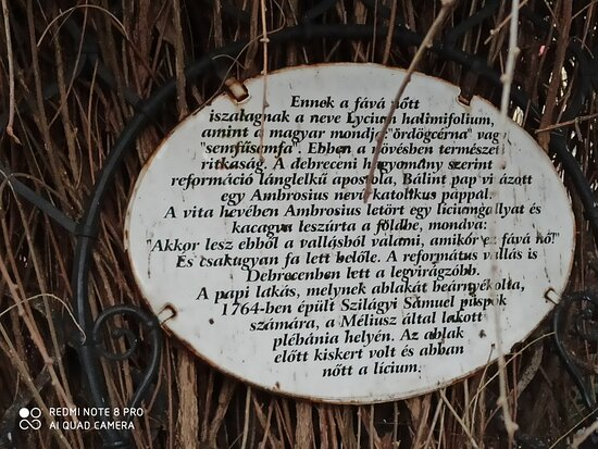 Liceum Bokor A Reformacio Emlekfaja