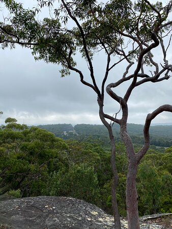 Australia Walkabout Wildlife: Overnight Stay and Wildlife Package: View from Mt White Lookout walk
