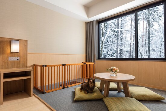 Dog Friendly Guest Room