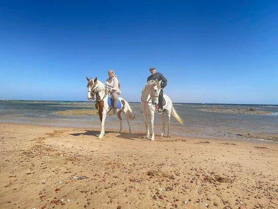 Sahara Stables Sharm