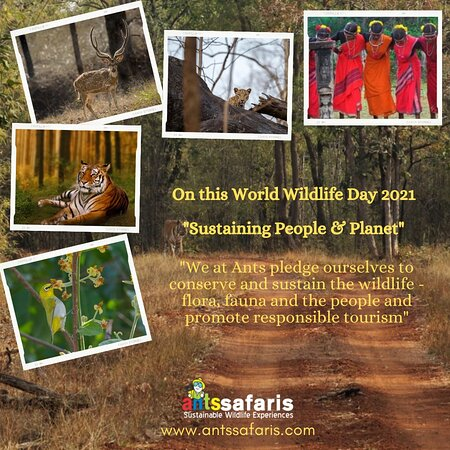 Nagpur District, อินเดีย: Wishing all a happy world wildlife day! Lets be the change