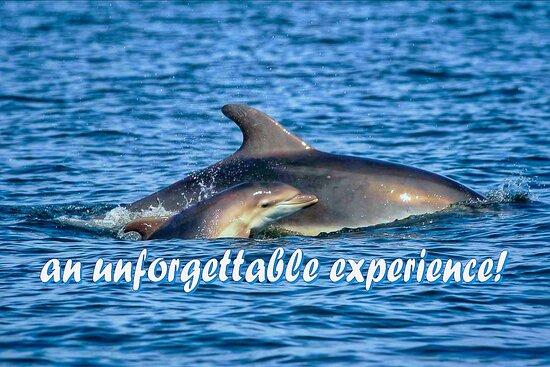 Dolphin Tours Istria