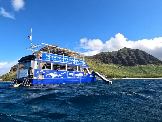 Sunrise Dolphin Turtle Reef Snorkel Experience - Oahu, Hawaii: The boat and inflatable slide