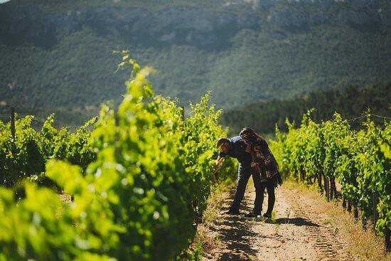 Dorgali, Italien: Lasciate guidare i vostri sensi nelle esperienze di degustazione fra vigna e cantina. Vi accompagneremo alla scoperta di un terroir e dei suoi preziosi frutti.