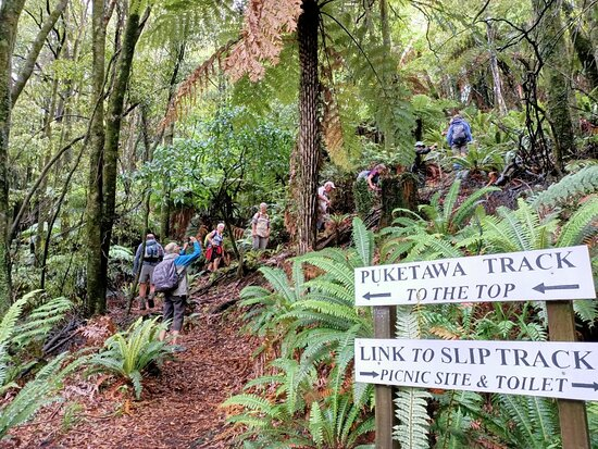 The Puketawa Track