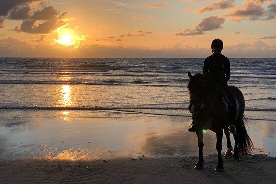 Hollumer Trap | Paardrijden op het strand