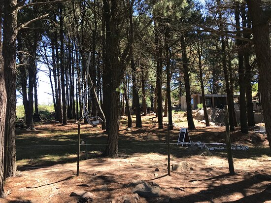 Bosque del Cerro